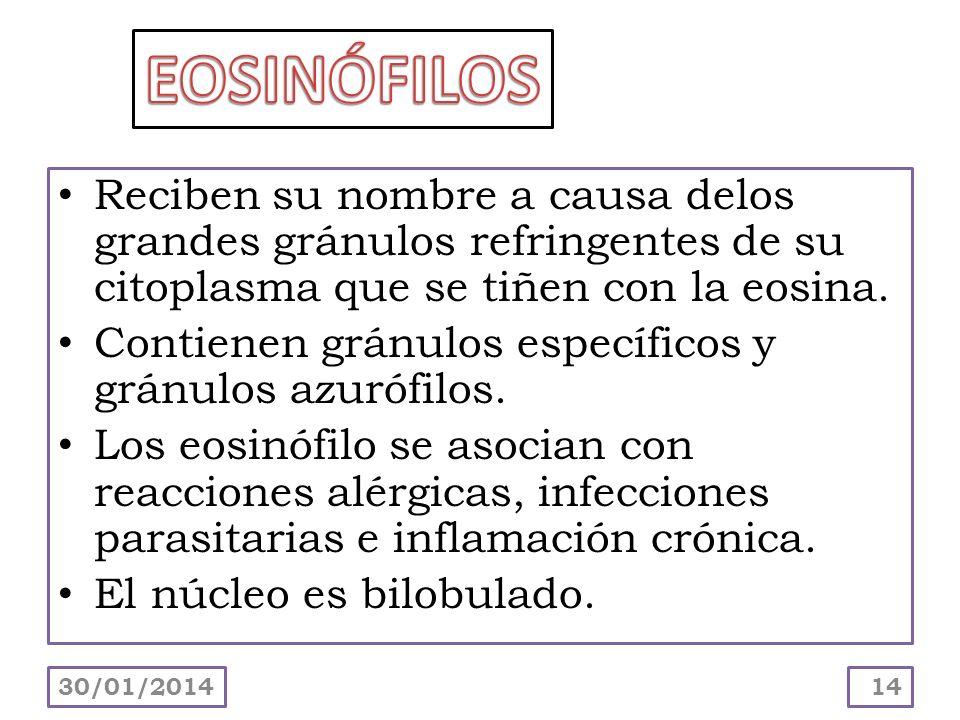 EOSINÓFILOSReciben su nombre a causa delos grandes gránulos refringentes de su citoplasma que se tiñen con la eosina.