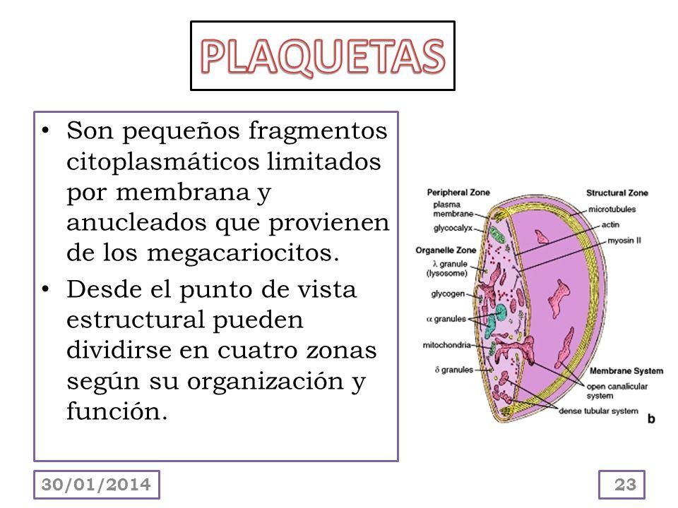 PLAQUETAS Son pequeños fragmentos citoplasmáticos limitados por membrana y anucleados que provienen de los megacariocitos.