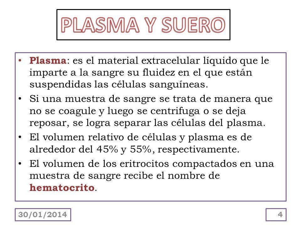 PLASMA Y SUERO Plasma: es el material extracelular líquido que le imparte a la sangre su fluidez en el que están suspendidas las células sanguíneas.
