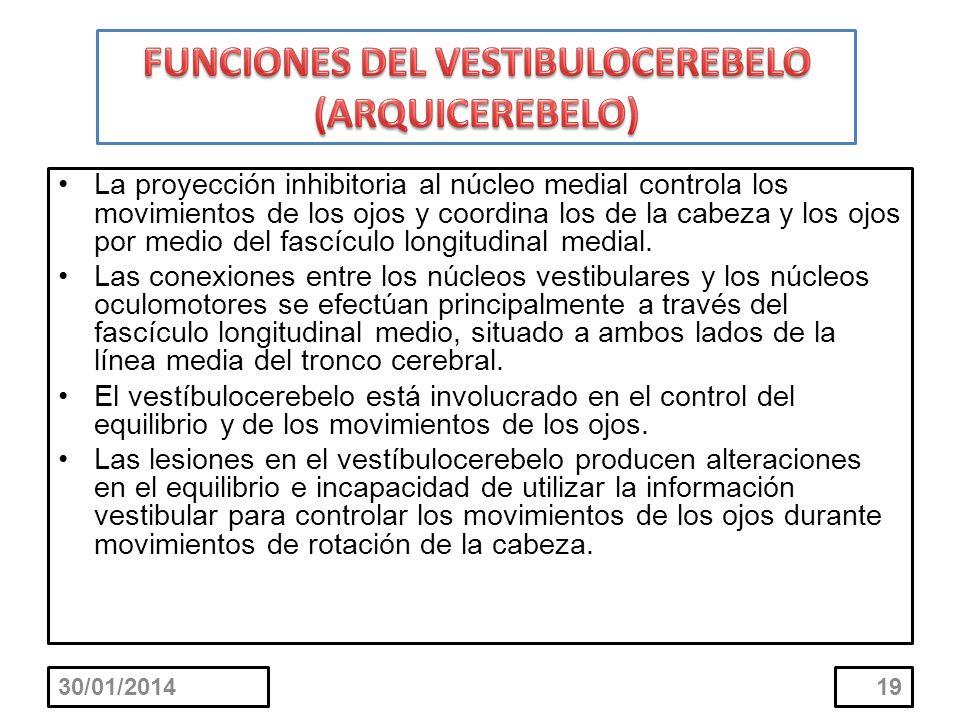 FUNCIONES DEL VESTIBULOCEREBELO (ARQUICEREBELO)