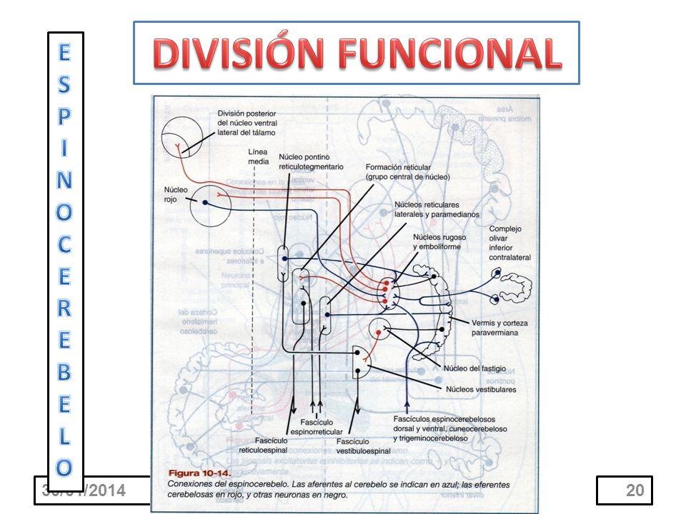 DIVISIÓN FUNCIONAL E S P I N O C R B L 24/03/2017