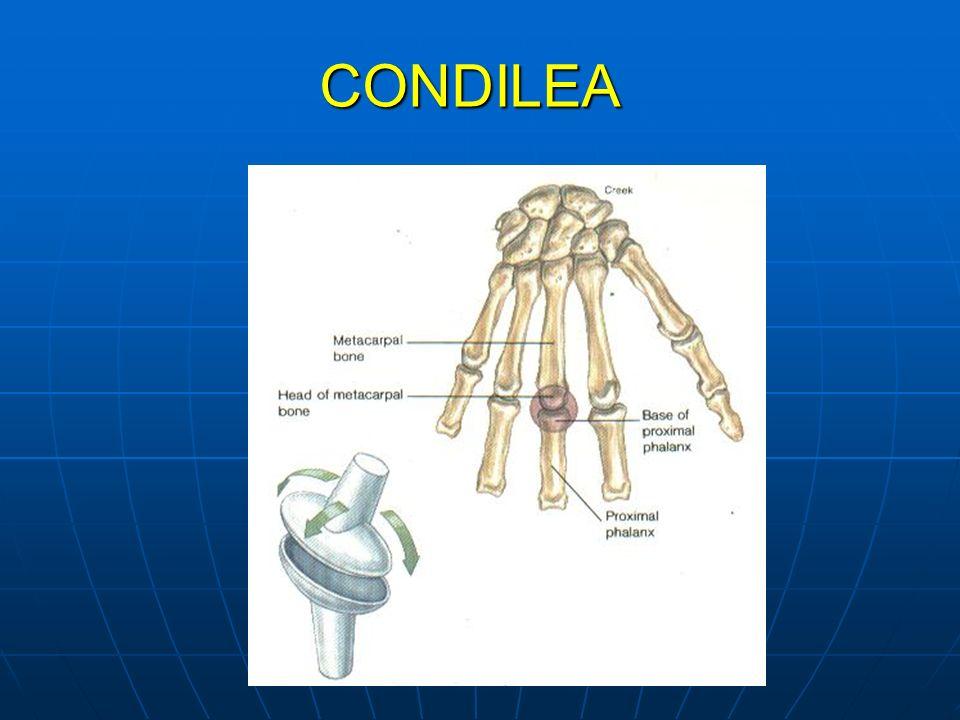 CONDILEA