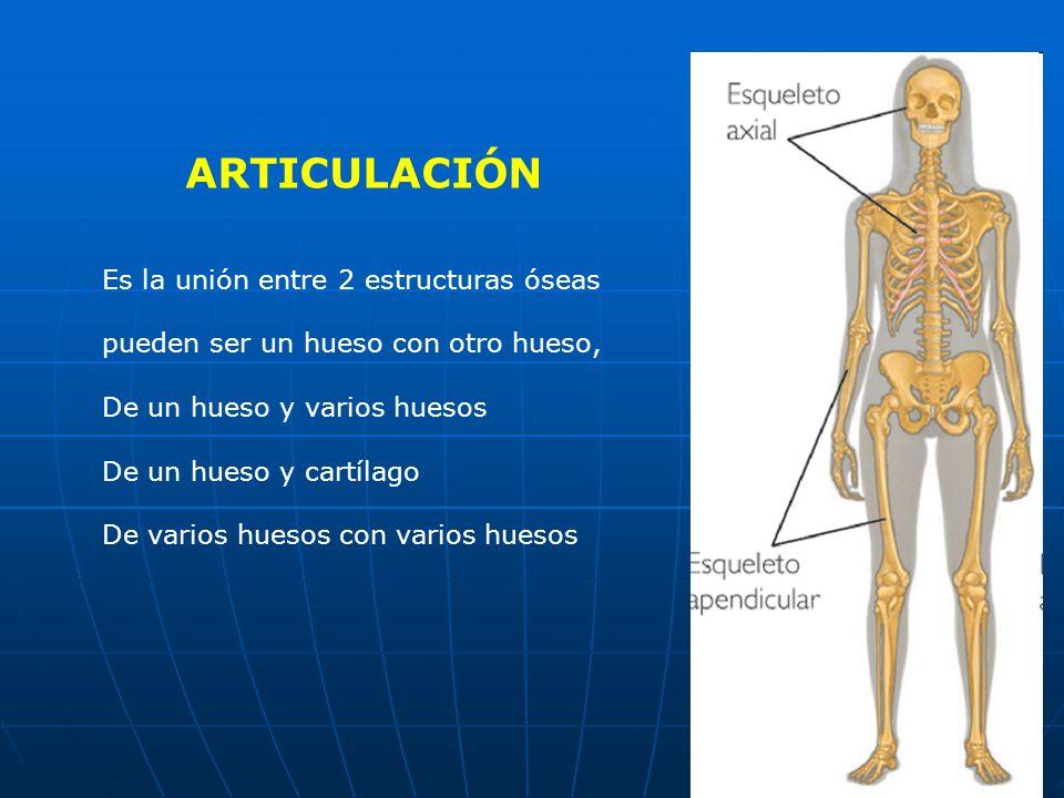 ARTICULACIÓN Es la unión entre 2 estructuras óseas