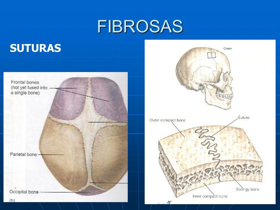 FIBROSAS SUTURAS