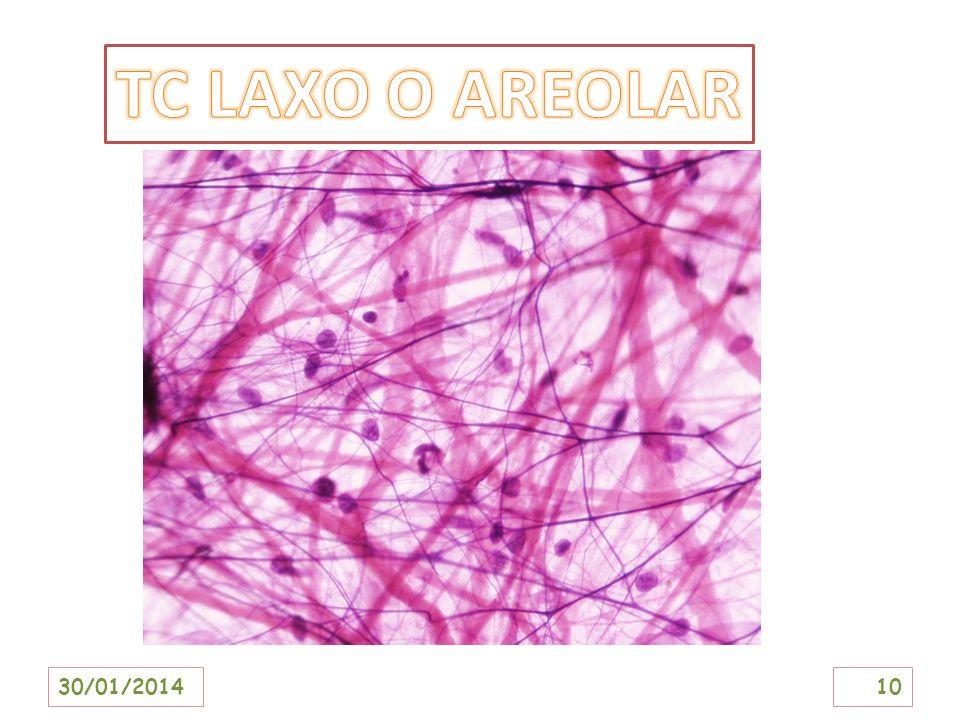 TC LAXO O AREOLAR 24/03/2017