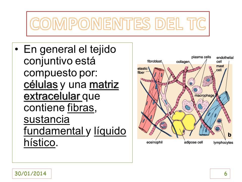 COMPONENTES DEL TC