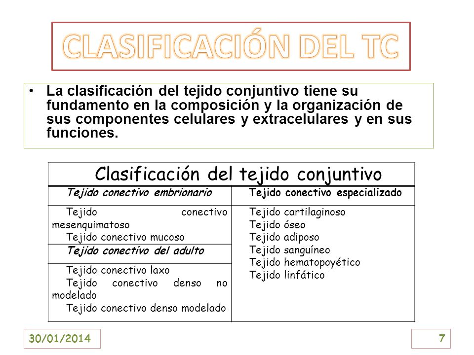 Clasificación del tejido conjuntivo
