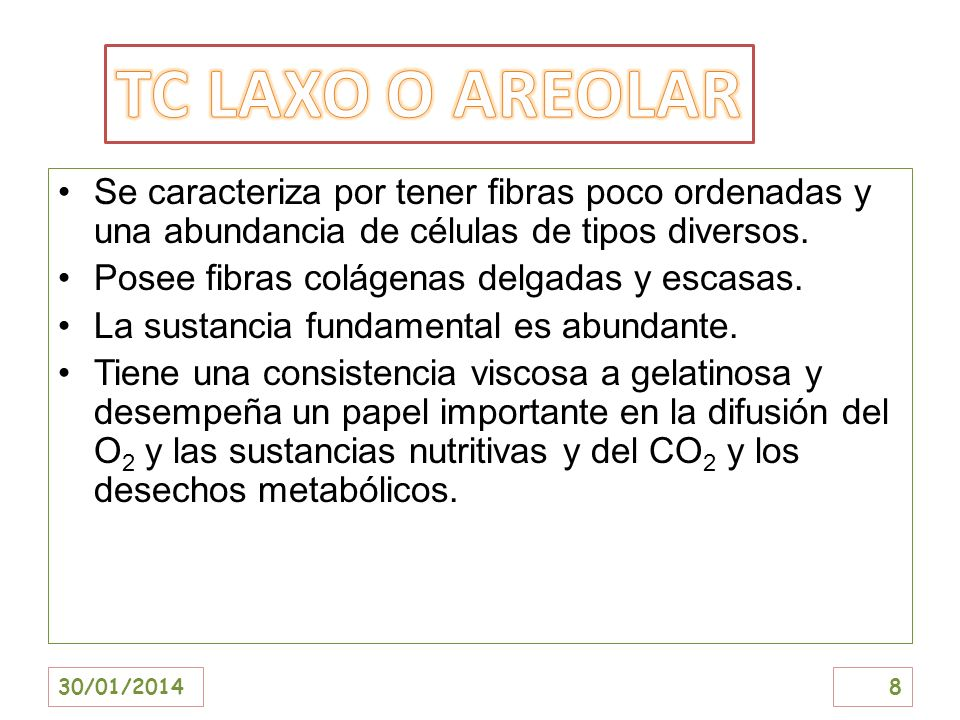 TC LAXO O AREOLARSe caracteriza por tener fibras poco ordenadas y una abundancia de células de tipos diversos.