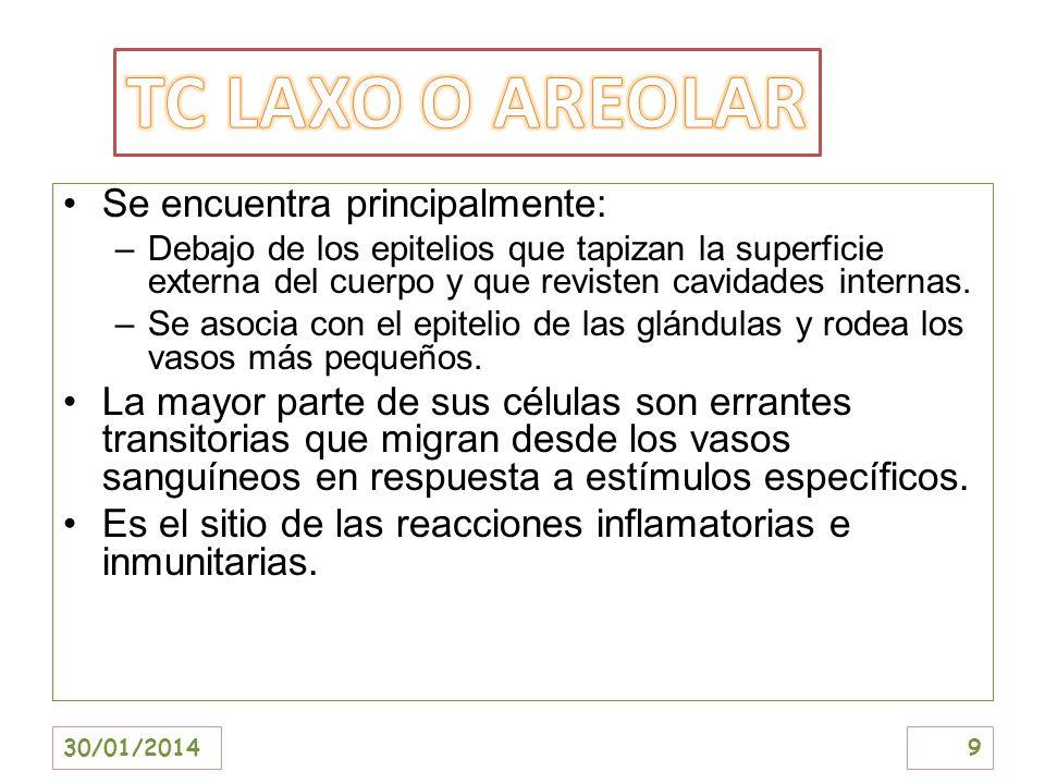 TC LAXO O AREOLAR Se encuentra principalmente: