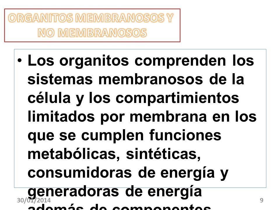 ORGANITOS MEMBRANOSOS Y
