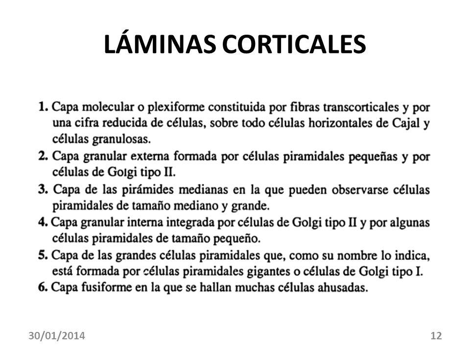 LÁMINAS CORTICALES 24/03/2017