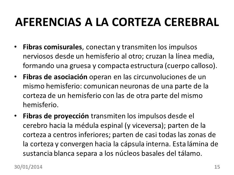AFERENCIAS A LA CORTEZA CEREBRAL