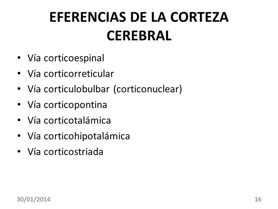 EFERENCIAS DE LA CORTEZA CEREBRAL