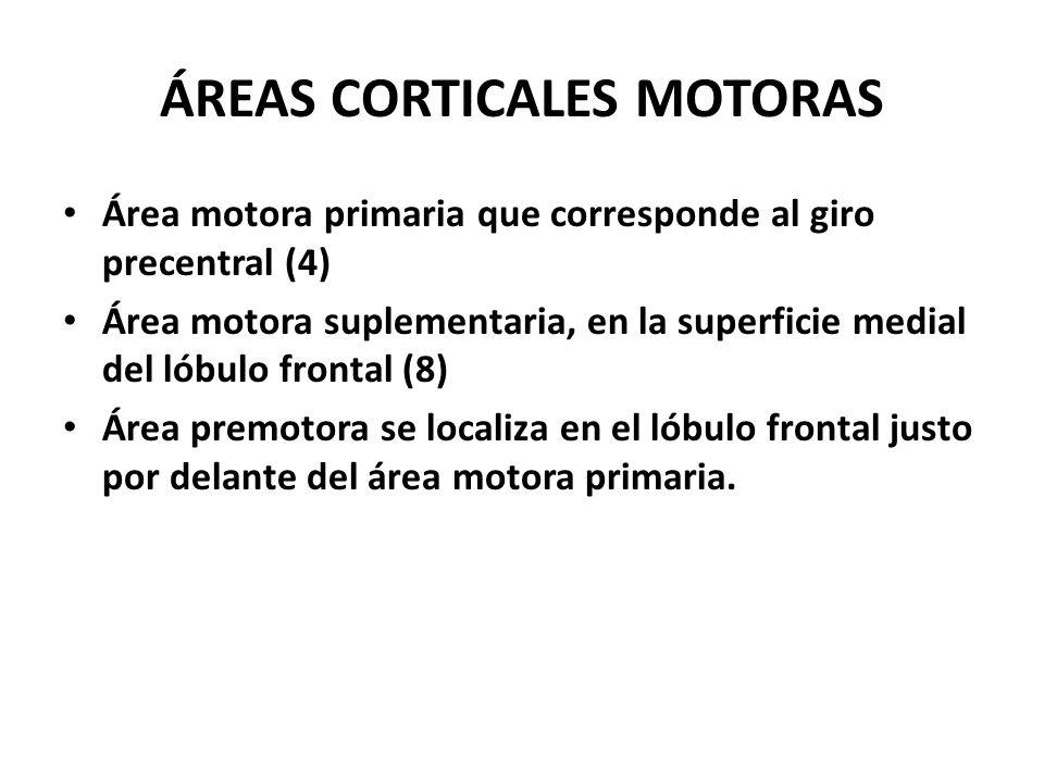 ÁREAS CORTICALES MOTORAS