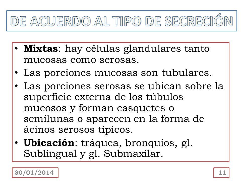 DE ACUERDO AL TIPO DE SECRECIÓN