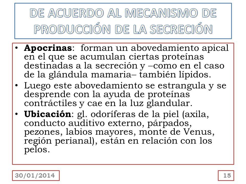 DE ACUERDO AL MECANISMO DE PRODUCCIÓN DE LA SECRECIÓN