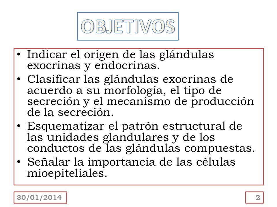 OBJETIVOS Indicar el origen de las glándulas exocrinas y endocrinas.