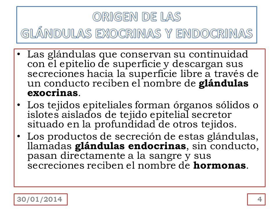 GLÁNDULAS EXOCRINAS Y ENDOCRINAS