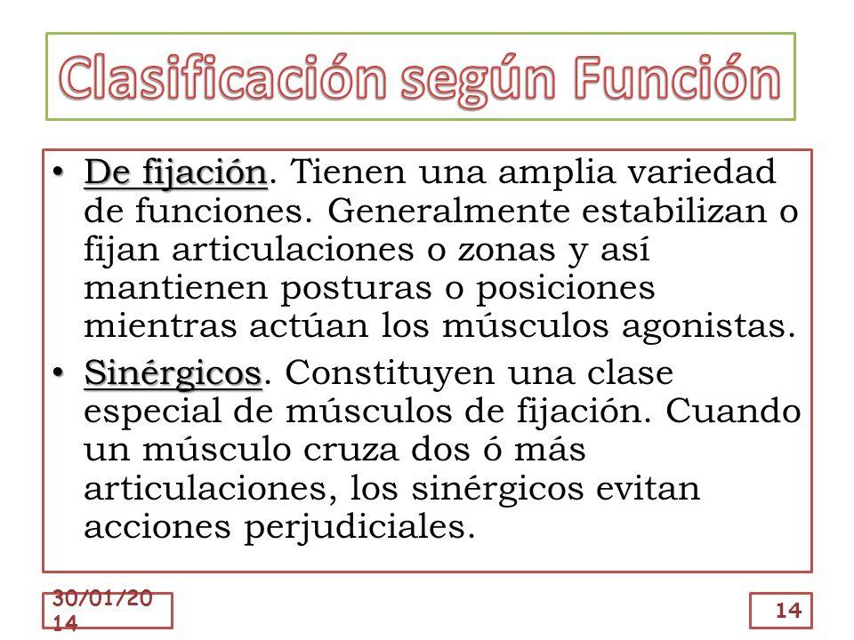Clasificación según Función