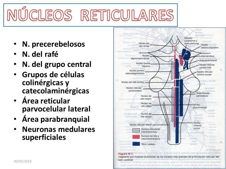 NÚCLEOS RETICULARES N. precerebelosos N. del rafé N. del grupo central