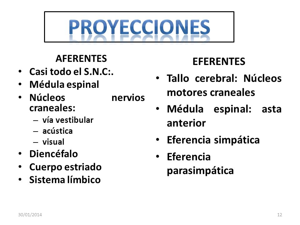 PROYECCIONES EFERENTES Tallo cerebral: Núcleos motores craneales