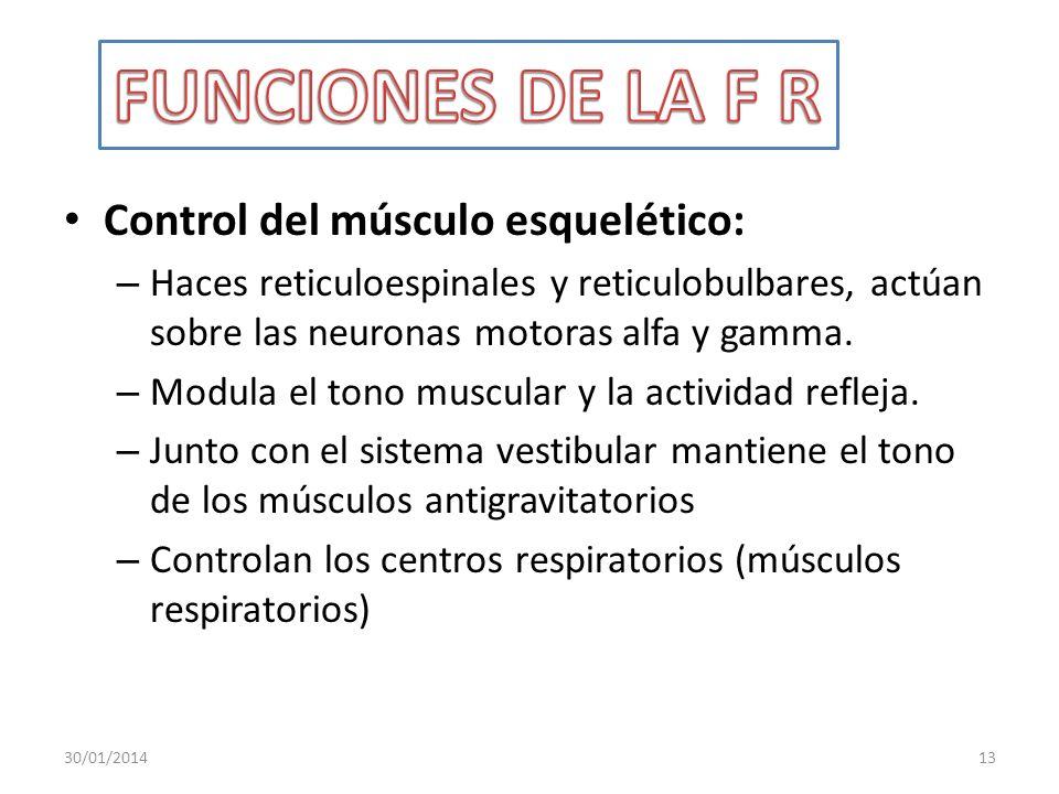 FUNCIONES DE LA F R Control del músculo esquelético: