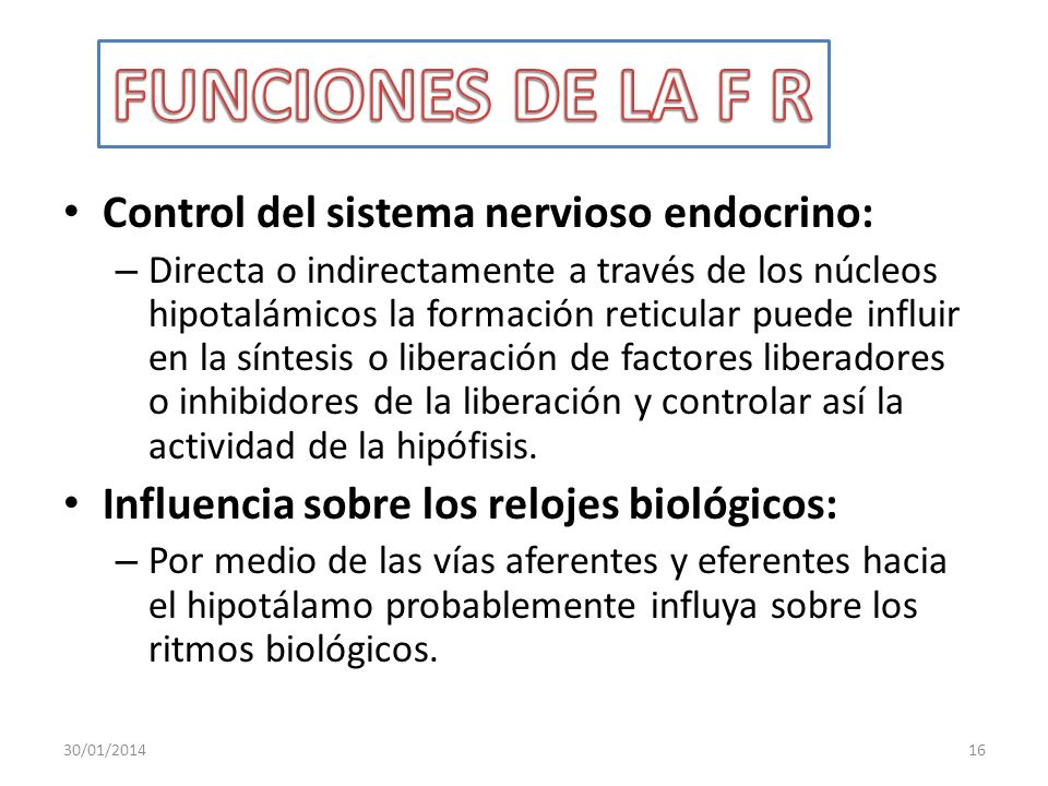 FUNCIONES DE LA F R Control del sistema nervioso endocrino: