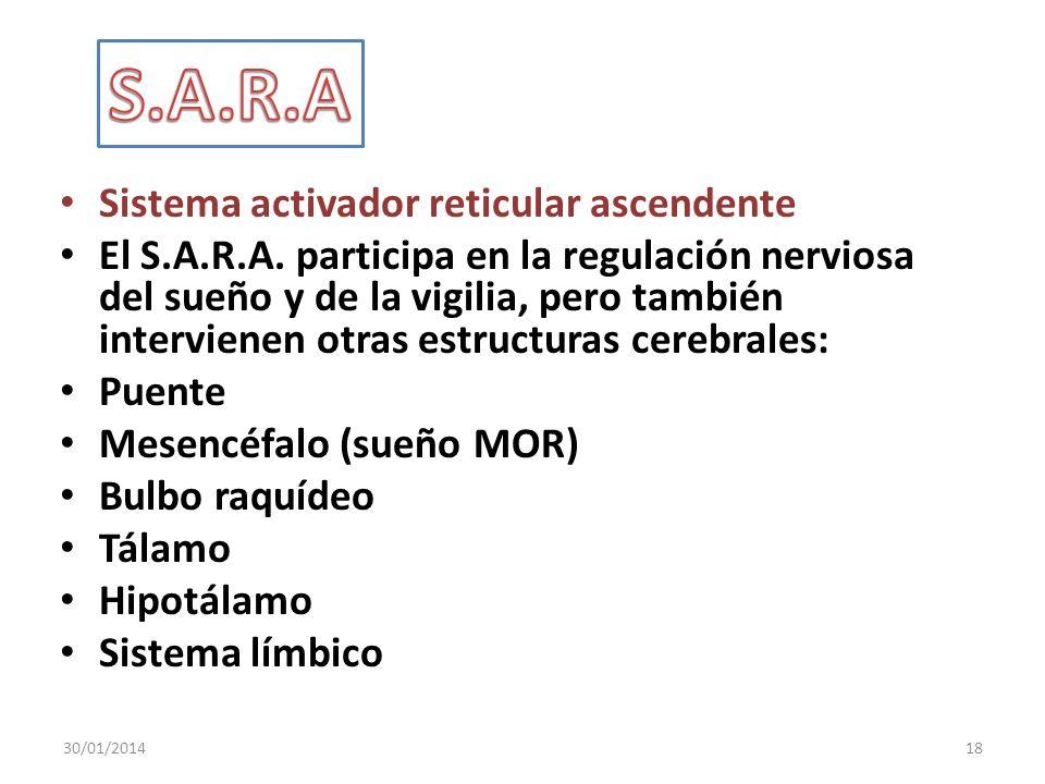 S.A.R.A Sistema activador reticular ascendente