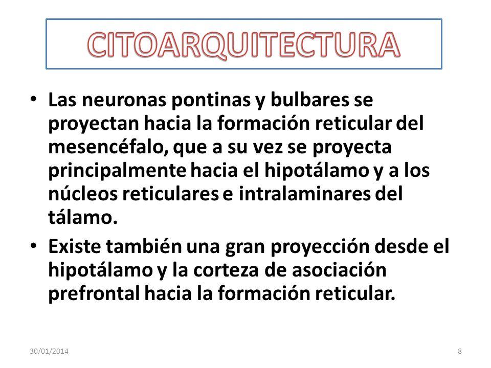 CITOARQUITECTURA