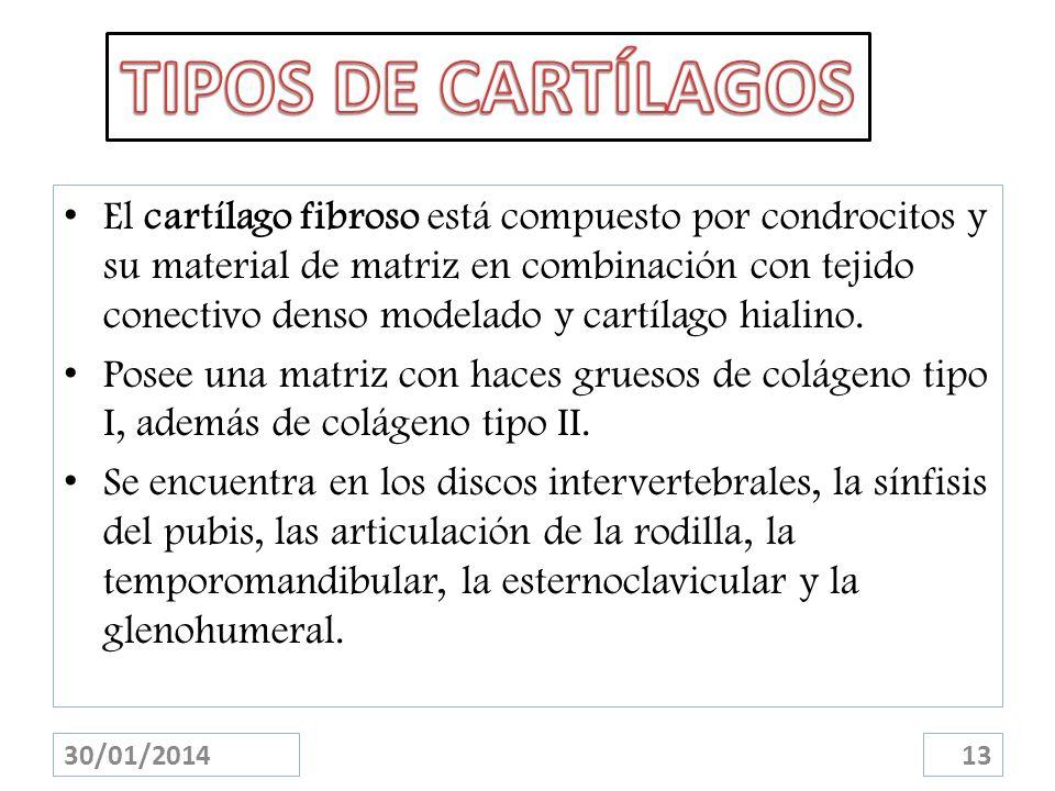 TIPOS DE CARTÍLAGOS