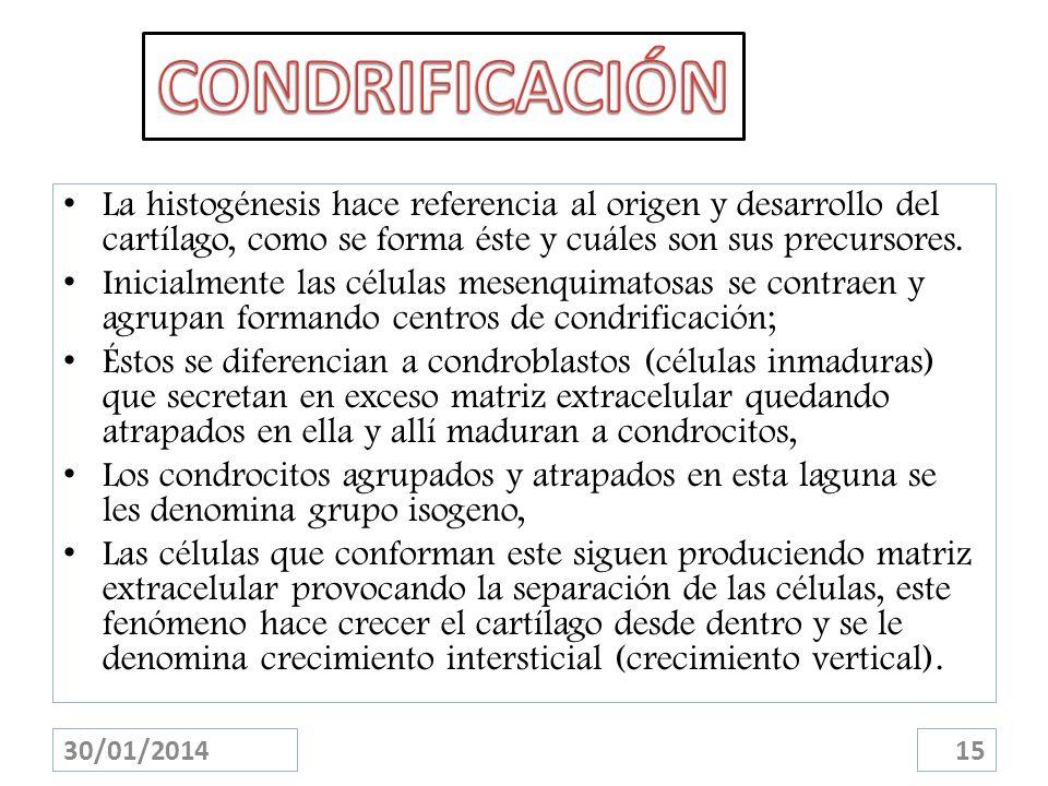 CONDRIFICACIÓN La histogénesis hace referencia al origen y desarrollo del cartílago, como se forma éste y cuáles son sus precursores.