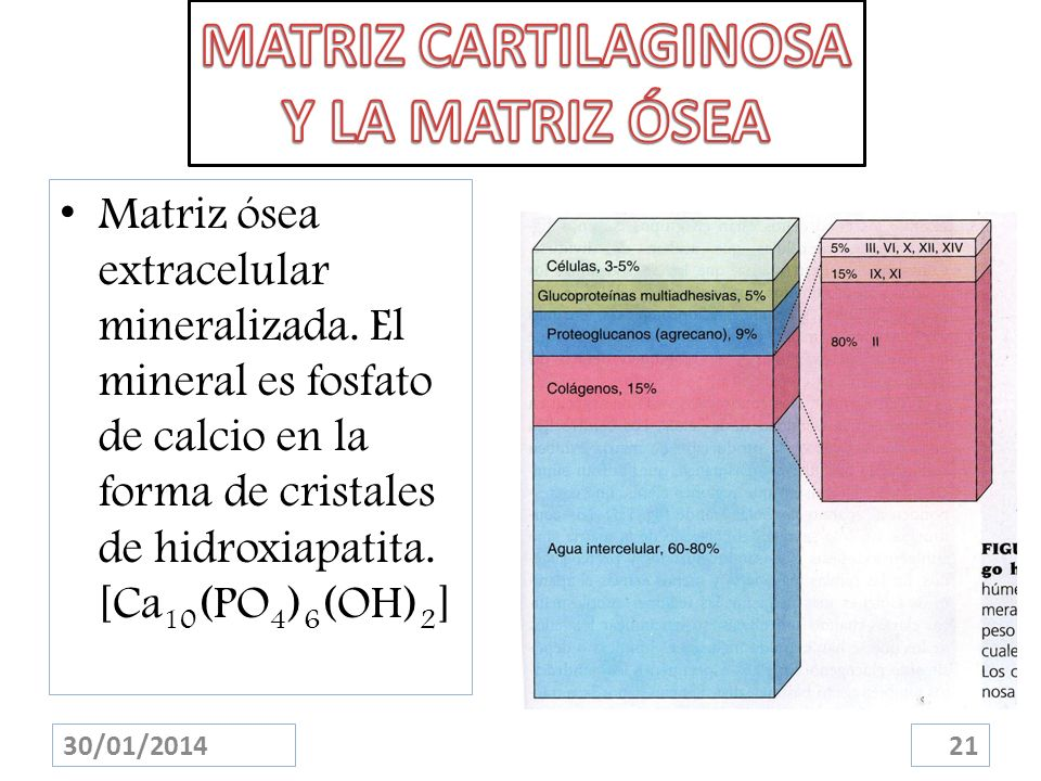 MATRIZ CARTILAGINOSA Y LA MATRIZ ÓSEA