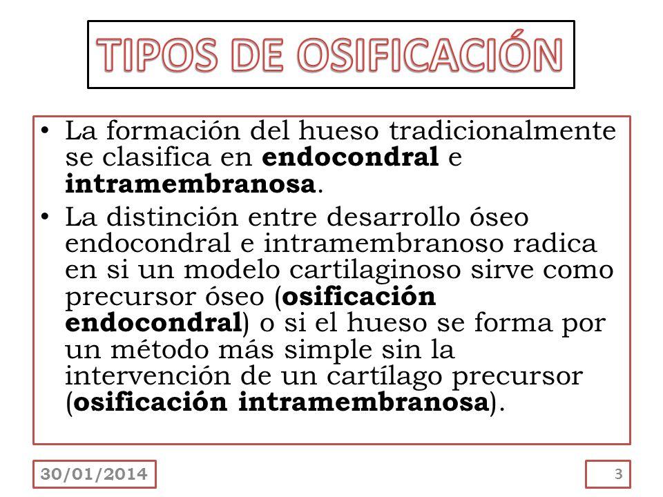 TIPOS DE OSIFICACIÓN La formación del hueso tradicionalmente se clasifica en endocondral e intramembranosa.