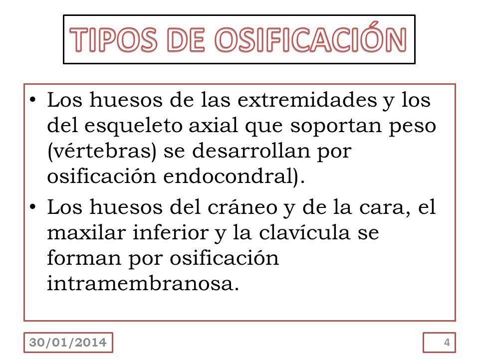 TIPOS DE OSIFICACIÓN