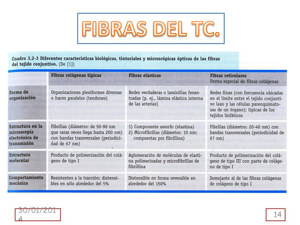 FIBRAS DEL TC. 24/03/2017