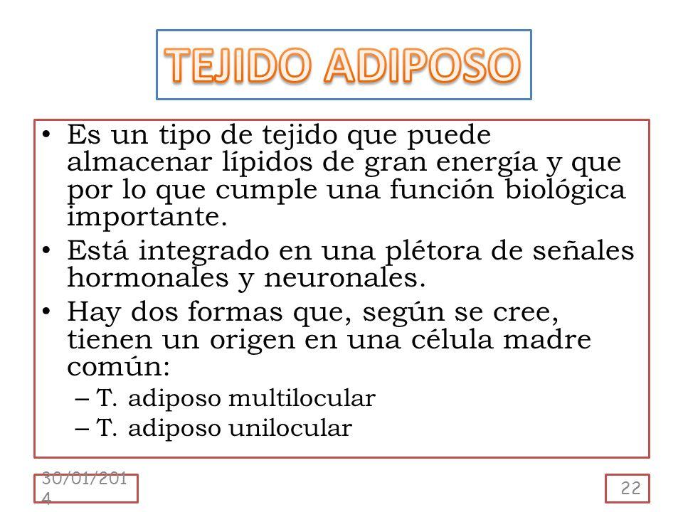 TEJIDO ADIPOSO Es un tipo de tejido que puede almacenar lípidos de gran energía y que por lo que cumple una función biológica importante.