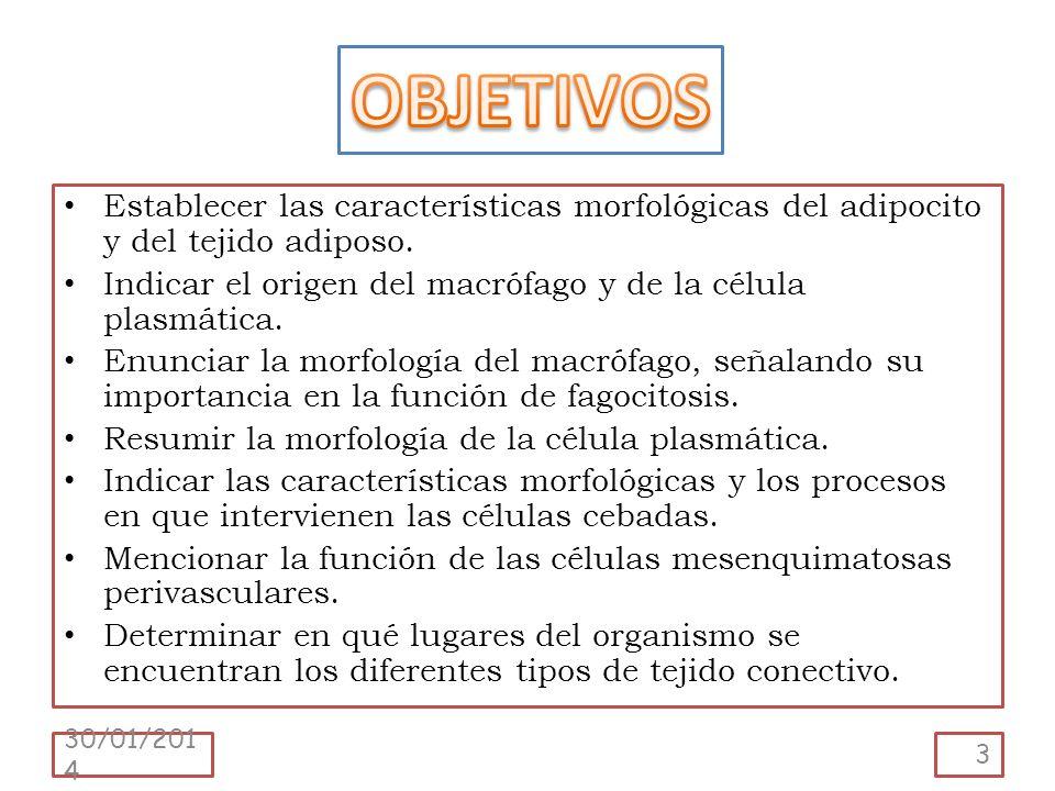 OBJETIVOS Establecer las características morfológicas del adipocito y del tejido adiposo. Indicar el origen del macrófago y de la célula plasmática.