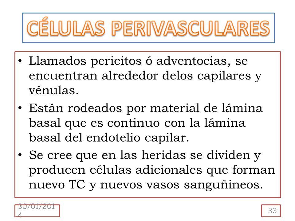 CÉLULAS PERIVASCULARES