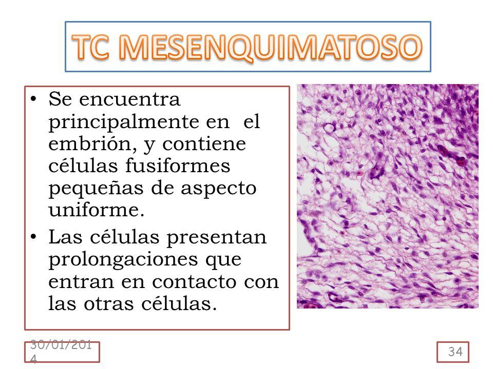 TC MESENQUIMATOSO Se encuentra principalmente en el embrión, y contiene células fusiformes pequeñas de aspecto uniforme.