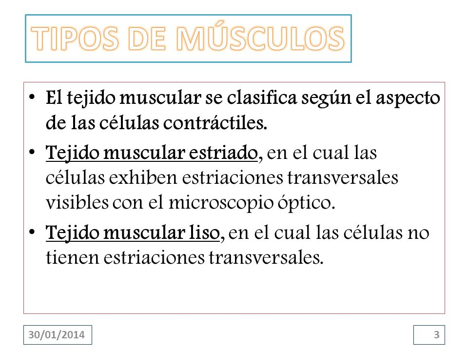 TIPOS DE MÚSCULOS El tejido muscular se clasifica según el aspecto de las células contráctiles.
