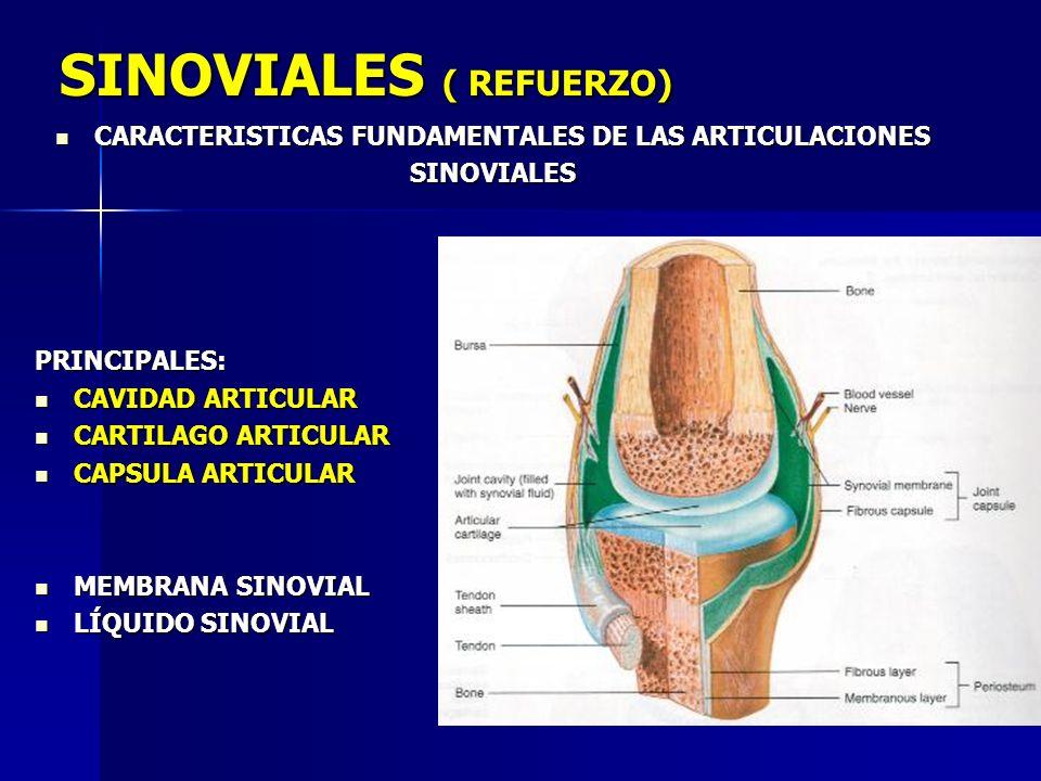 SINOVIALES ( REFUERZO)