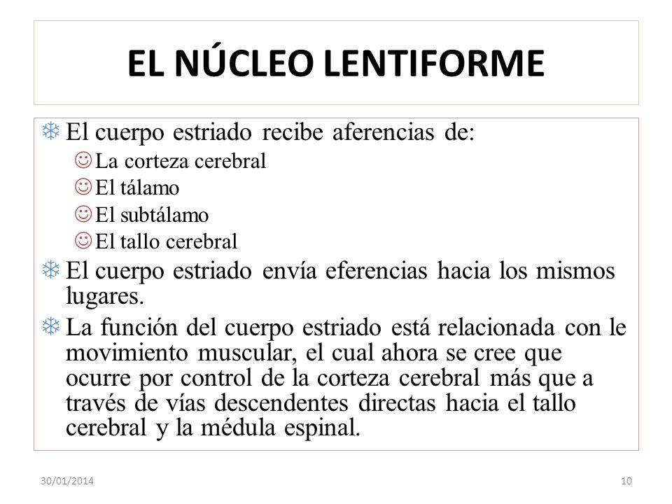 EL NÚCLEO LENTIFORME El cuerpo estriado recibe aferencias de: