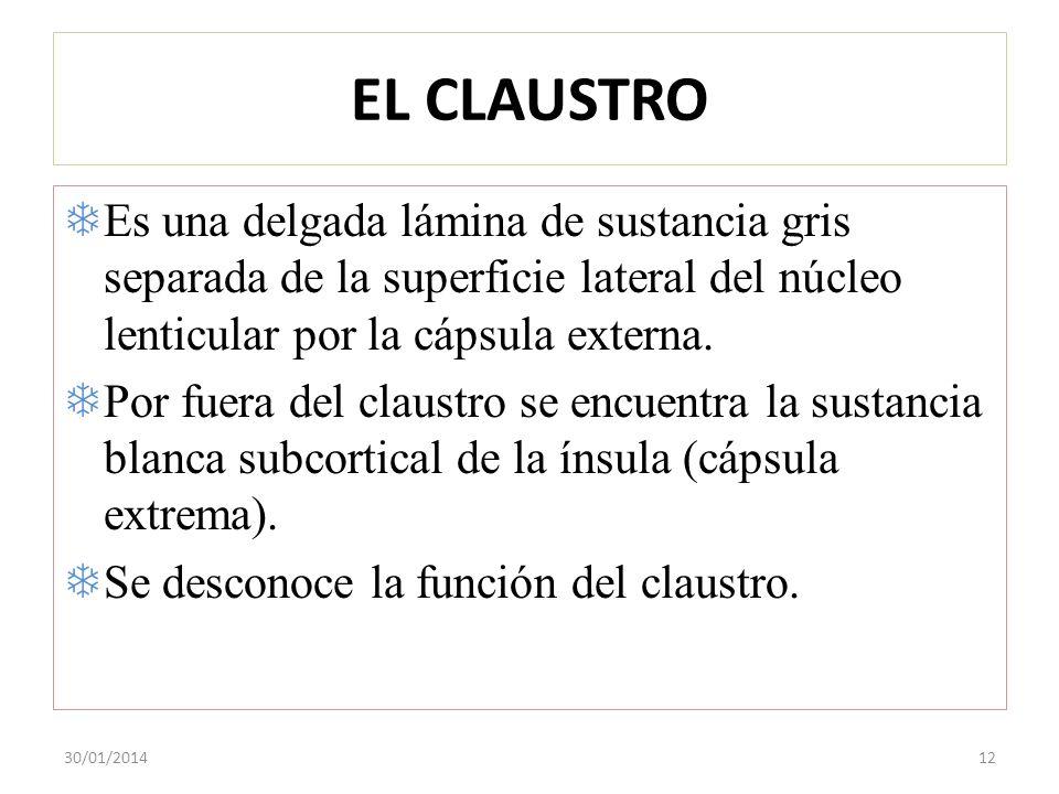 EL CLAUSTRO Es una delgada lámina de sustancia gris separada de la superficie lateral del núcleo lenticular por la cápsula externa.