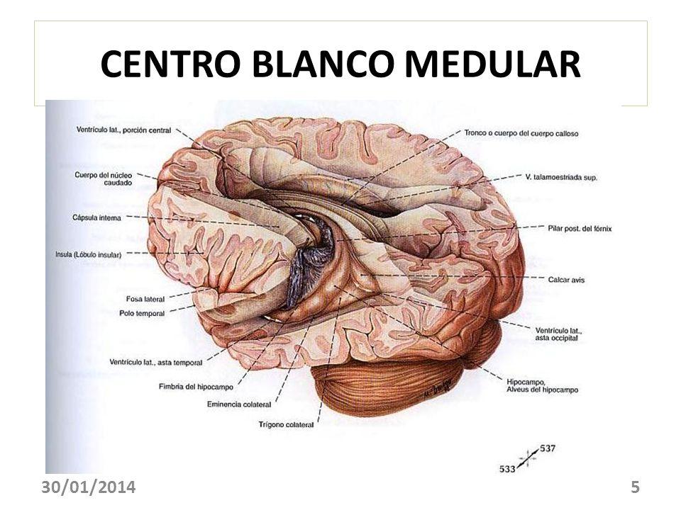 CENTRO BLANCO MEDULAR 24/03/2017