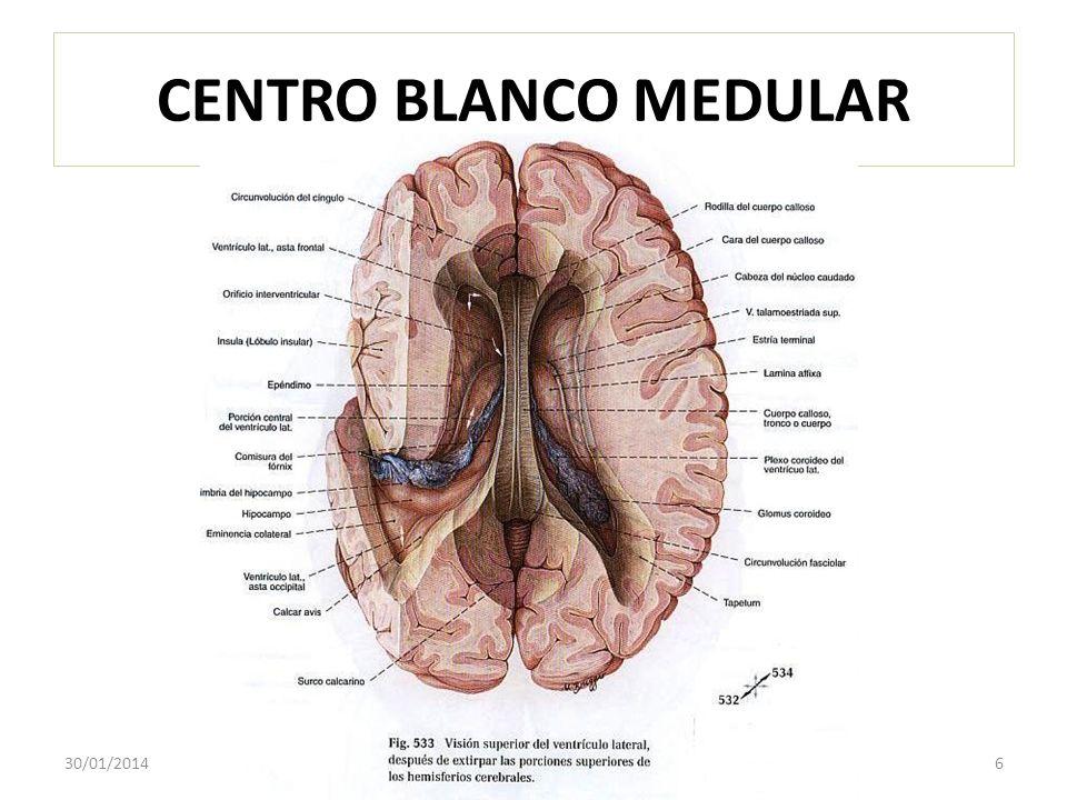 CENTRO BLANCO MEDULAR 24/03/2017 6