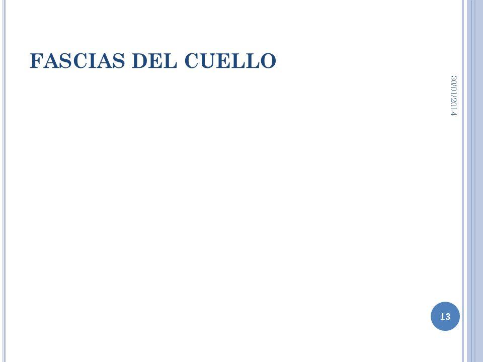 FASCIAS DEL CUELLO 24/03/2017