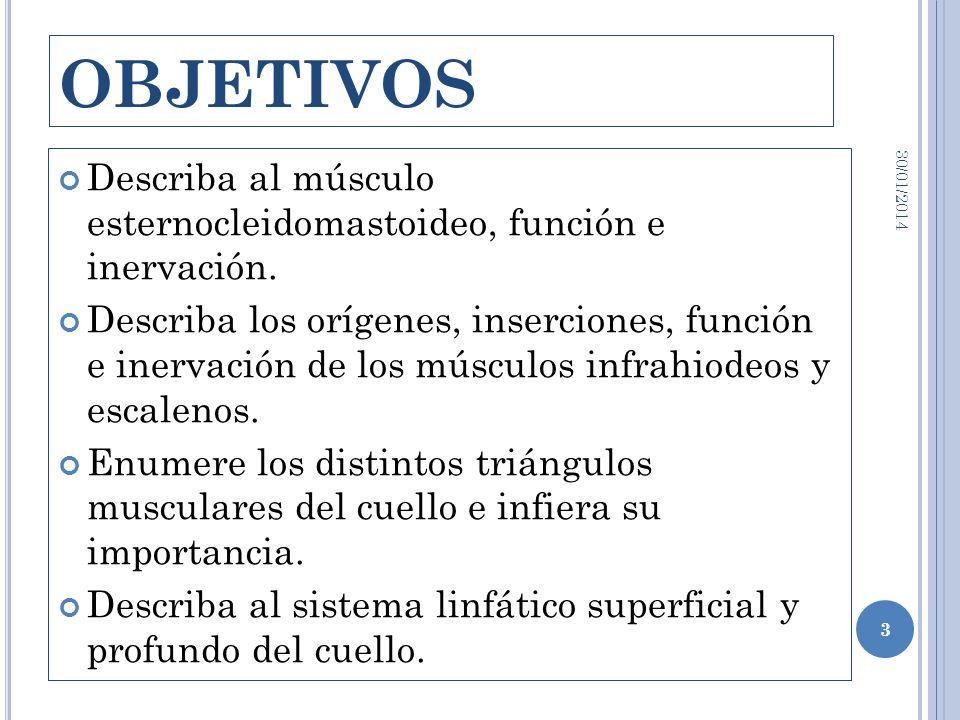OBJETIVOS24/03/2017. Describa al músculo esternocleidomastoideo, función e inervación.