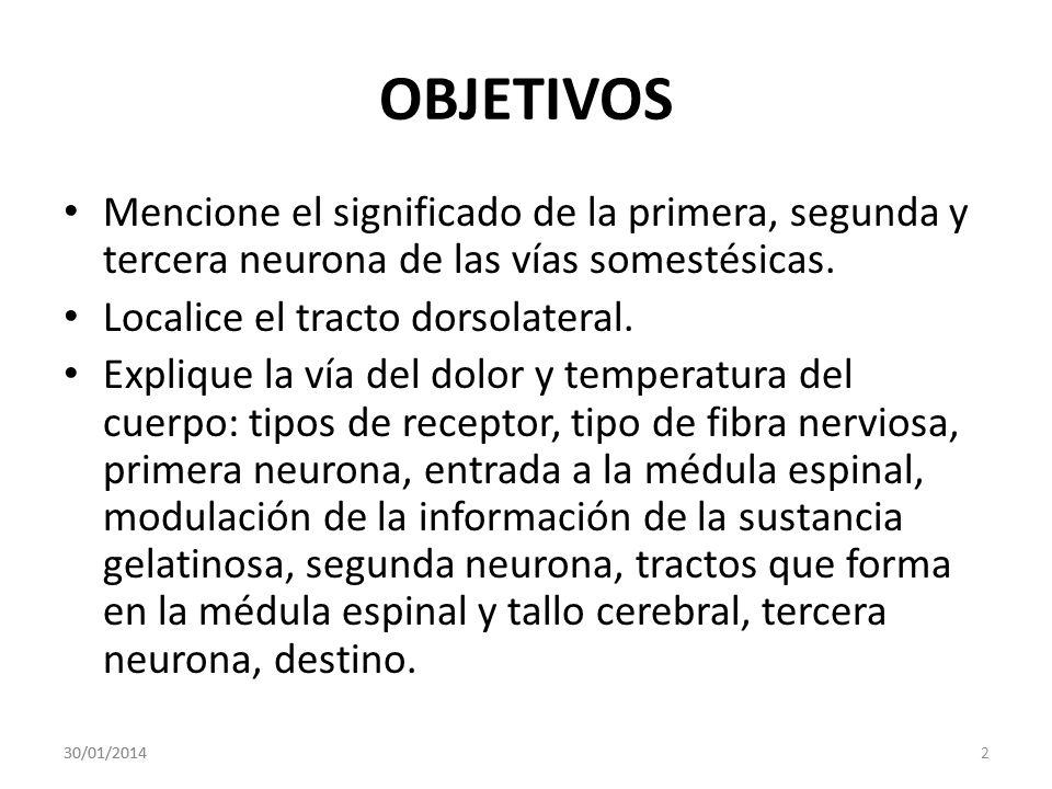 OBJETIVOS Mencione el significado de la primera, segunda y tercera neurona de las vías somestésicas.