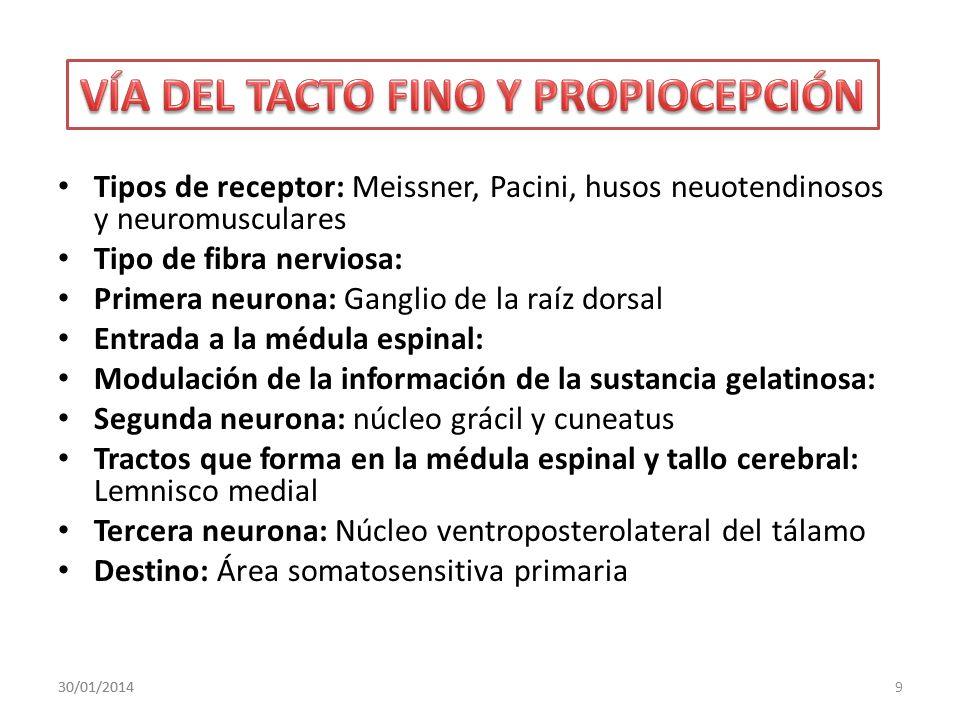 VÍA DEL TACTO FINO Y PROPIOCEPCIÓN