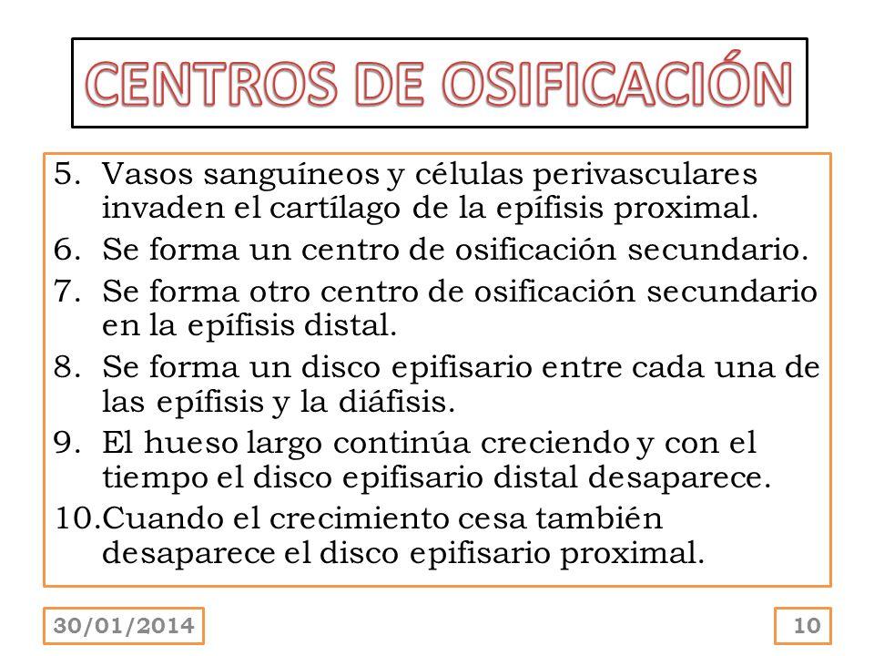 CENTROS DE OSIFICACIÓN